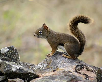 Photograph - Brown Squirrel In Spokane by Ben Upham III