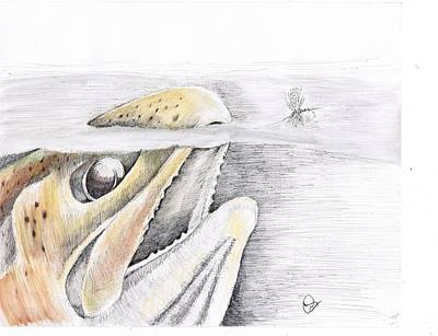 Brown Trout Drawing - Brown Trout  by H C Denney
