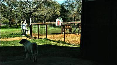 Photograph - Bruiser - Barbara - Horses 2009 by Glenn Bautista