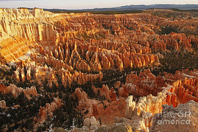 Photograph - Bryce Canyon Amphitheater by Dennis Hedberg