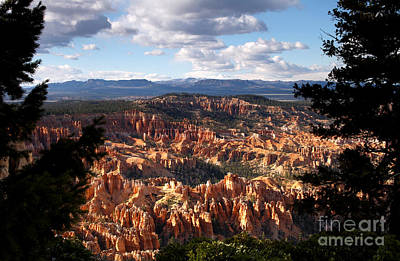 Photograph - Bryce Canyon Ampitheater by Butch Lombardi