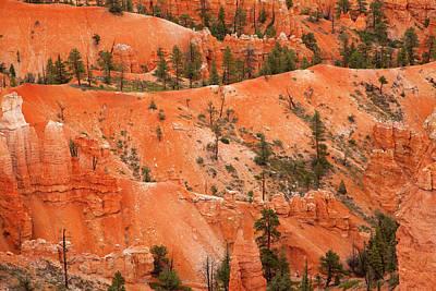Photograph - Bryce Canyon Hoodoos And Ponderosa Pines by John Stephens
