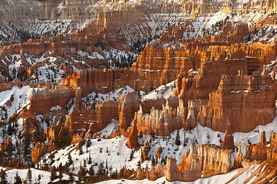 Bryce Canyon Morning Light  Art Print
