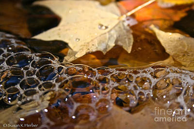 Photograph - Bubble Leaves by Susan Herber