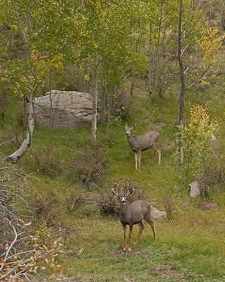 Mule Deer Buck Photograph - Buck And Doe by Ernie Echols