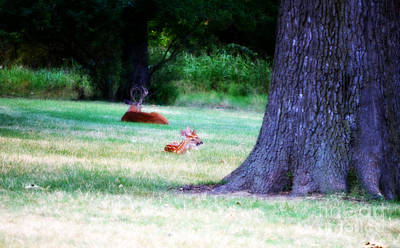 Photograph - Buck And Fawns On Sunday Morning by Peggy Franz