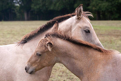 Photograph - Buckskin Foals by Jim  Arnold