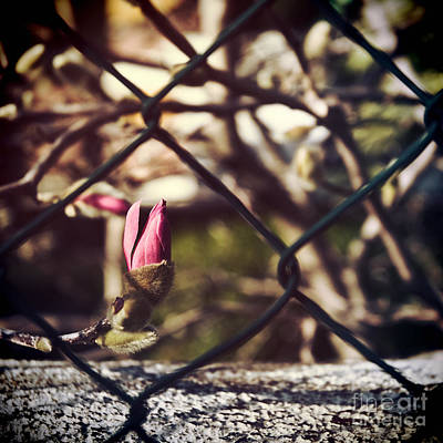 Photograph - Bud by Silvia Ganora