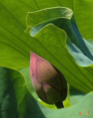 Photograph - Bud Watched Over Dl050 by Gerry Gantt