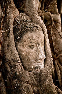 Photograph - Buddha Head Strangled By The Roots  by Ulrich Schade