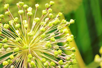 Photograph - Budding Foliage by Shehan Wicks