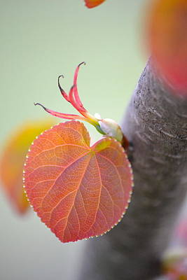 Photograph - Budding Heart by JD Grimes