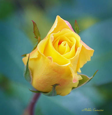 Budding Yellow Rose Art Print