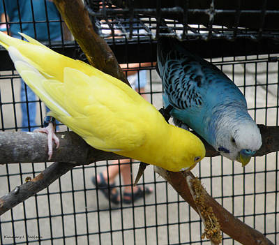 Ebsq Digital Photograph - Budgie Couple by Kimmary MacLean