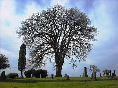 Photograph - Buena Vista Cemetery Port Gamble by Kelly Manning