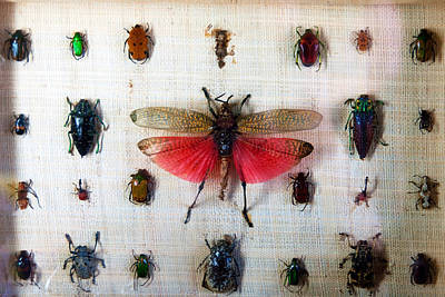 Photograph - Bug Box by Tim Nichols