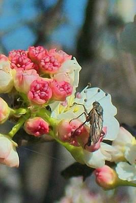 Bug On Blossom Original