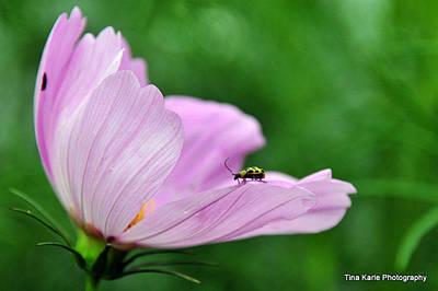 Bug On Flower Tip Art Print by Tina Karle