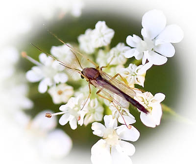 Photograph - Bug On White by Maureen  McDonald