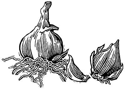 Linocut Photograph - Bulbs Of Garlic, Woodcut by Gary Hincks