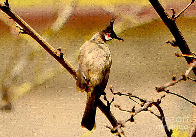 Red Whiskered Bulbul Photograph - Bulbul by Nilay Tailor