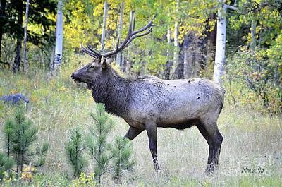 Art Print featuring the photograph Bull Elk by Nava Thompson