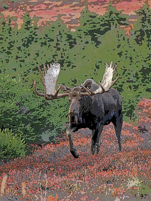Breed Digital Art - Bull Moose In Autumn- Abstract by Tim Grams