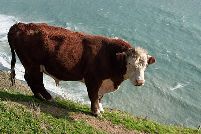 Photograph - Bull On The Edge by Lorraine Devon Wilke