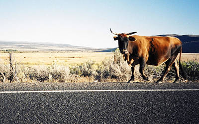 Photograph - Bull On The Road by Peter Mooyman