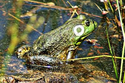 Photograph - Bullfrog 1 by Joe Faherty