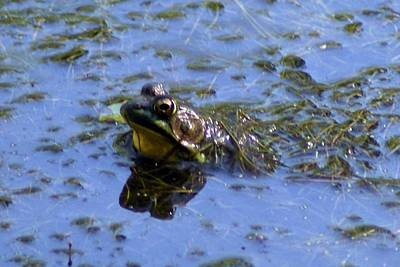 Photograph - Bullfrog 2 by Joe Faherty