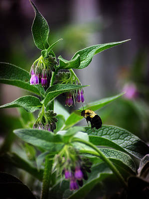 Photograph - Bumble Bee 3 by Scott Hovind