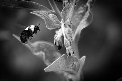 Photograph - Bumble Bee 4 by Scott Hovind