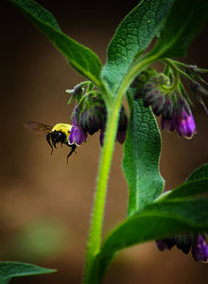 Photograph - Bumble Bee 5 by Scott Hovind