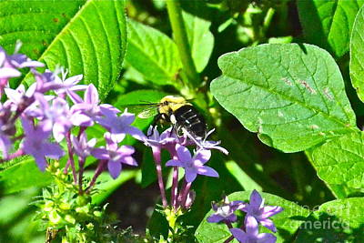 Photograph - Bumble Bee by Carol  Bradley