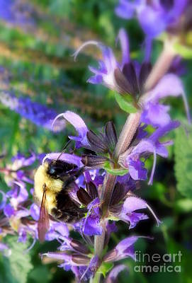 Bumble Bee On Flower Art Print by Renee Trenholm