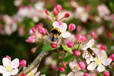Photograph - Bumble Blossom by Ed Lukas