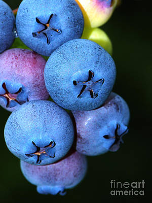 Photograph - Bunch Of Blueberries by Sharon Talson