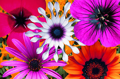 Multi Colored Photograph - Bunch Of Multi Colored Flowers, Full Frame by John Foxx
