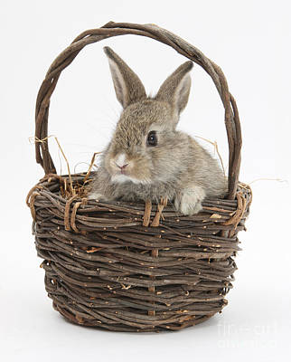 In Baskets Photograph - Bunny In A Basket by Mark Taylor