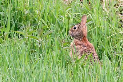 Photograph - Bunny Peeking Out by Mark J Seefeldt