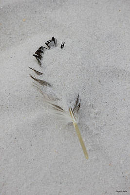 Buried Feather Art Print by Deborah Hughes