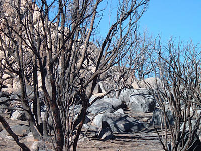 Anza Borrego Photograph - Burned Forest 4 by Naxart Studio