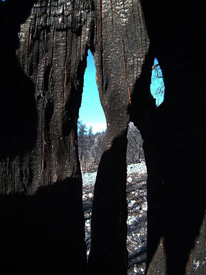 Anza Borrego Photograph - Burned Trees 10 by Naxart Studio