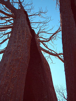 Anza Borrego Photograph - Burned Trees 6 by Naxart Studio