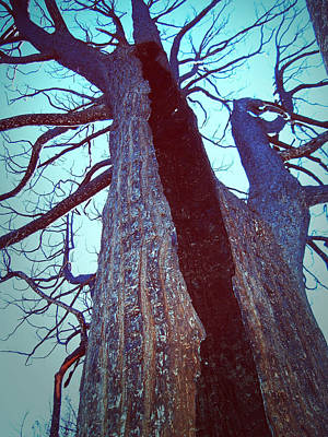 Anza Borrego Photograph - Burned Trees 8 by Naxart Studio