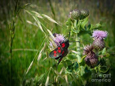 Photograph - Burnet Moth by Yvonne Johnstone