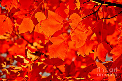 Photograph - Burning Leaves by Venura Herath