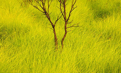 Photograph - Burnt Tree Green Grass by Rich Franco