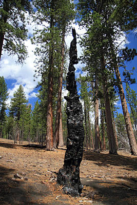 Photograph - Burnt Tree In Lassen Volcanic National Park by Pierre Leclerc Photography